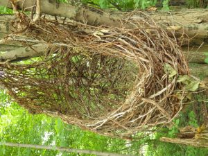 A nest structure, built by man to mimic structures found in the wild.